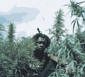 peter_tosh_bush_doctor.png_480_480_0_64000_0_1_0