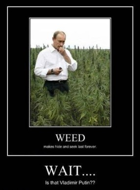 weed-and-vladimir-putin