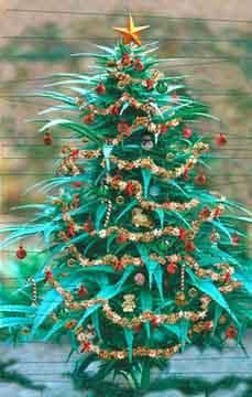 WAMM Christmas Tree!