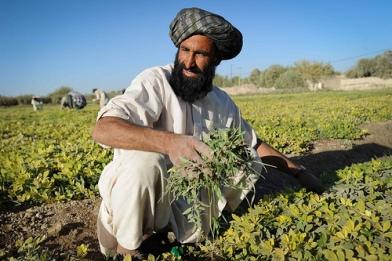 Experimental Agriculture Farm in Lashkar Gah, Helmand Province